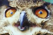 eyesowl